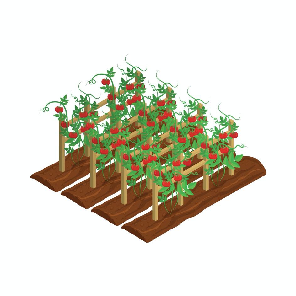 Des jardins potagers dans l'espace ?