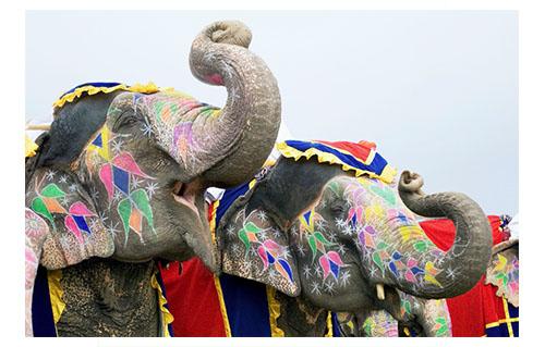 L'éléphant, à la fois vénéré et redouté au Sri-Lanka