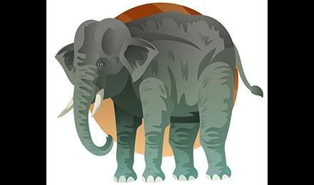 Mara l'éléphante est sauvée