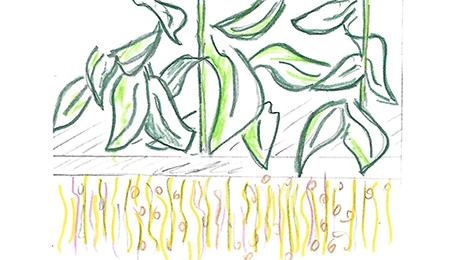 Traire les plantes
