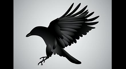 Des oiseaux éboueurs