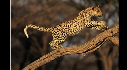 Les prédateurs sont indispensables aux écosystèmes