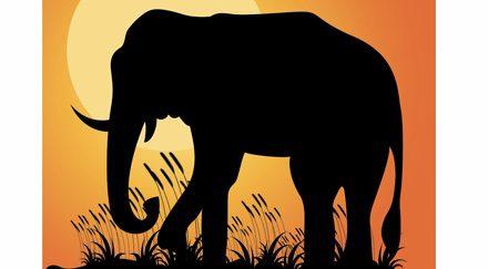 La longue marche des éléphants d'Asie