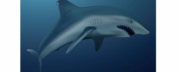 Dans la peau d'un requin