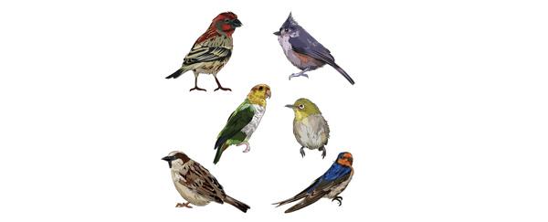 Aimer les oiseaux